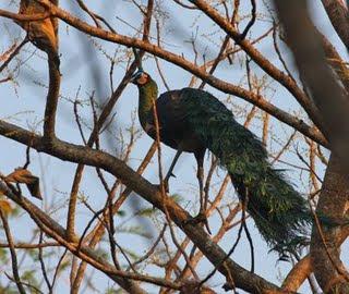 Kebun Binatang Kasang kulim Riau