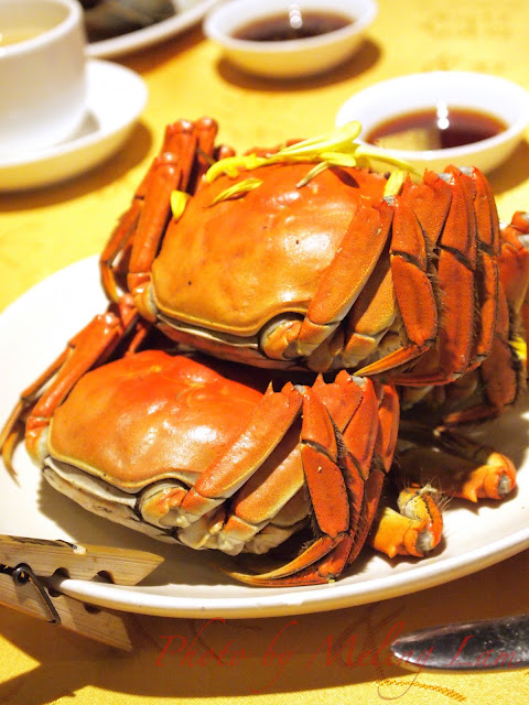 上海 大閘蟹 成隆行 shanghai crab