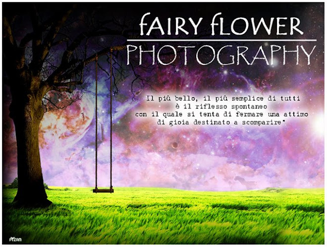 Fairy Flower Photography