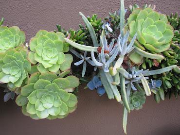 #5 Vertical Garden Design Ideas