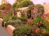Rosas cuidados noviembre 2008 for Diseno jardin mediterraneo
