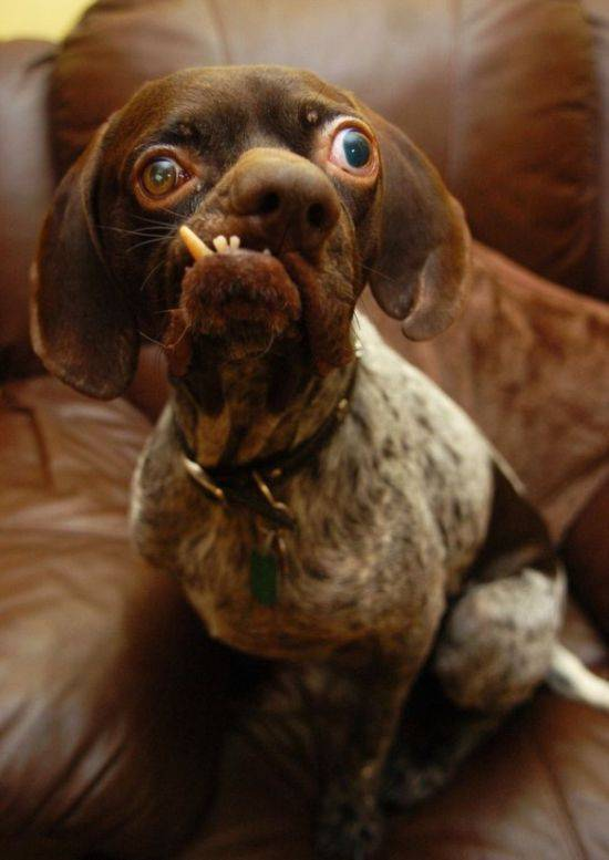 Oddities of World: The Ugliest Dog of World