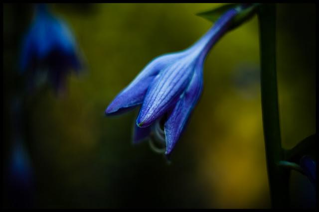 Martwa natura. fot. Łukasz Cyrus