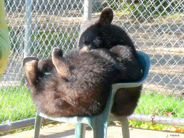 baby bear in chair
