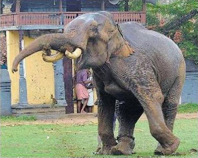 elephant-attack-kerala-06.jpg