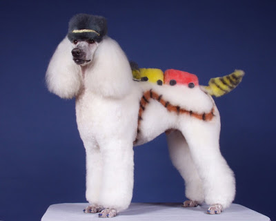 poodle haircuts pictures