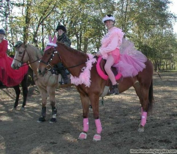 19 weird horse fancy dressing curious funny photos pictures