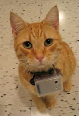 Kediler bakışı - kedi gözü ile hayata görme - 75 Resimler