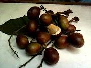 Buah matoa buah yang kaya manfaat
