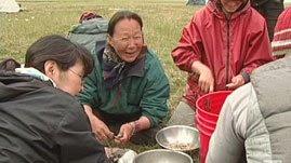 Alaska Native American Indian Traditional Food