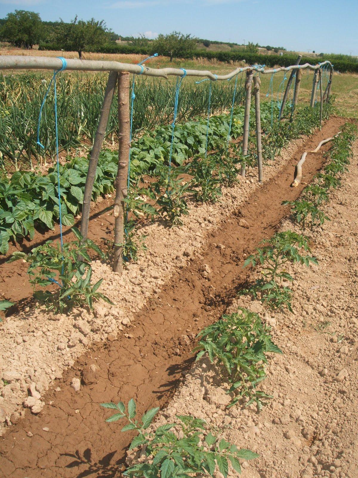 Mariyerbas huerto familiar for Que plantas se siembran en un huerto