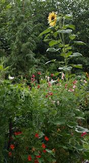 Garden 8-14-09