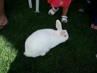 White bunny on grass