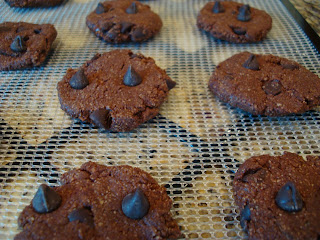 Close up of Batter formed into cookie shapes and placed on dehydrator tray
