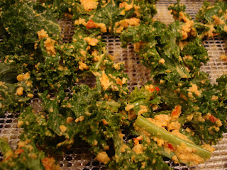 Close up of nutritional yeast mixture rubbed on kale leaves on dehydrator trays