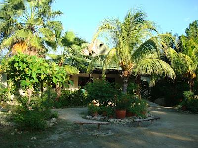 Greenery inside the Butterfly Farm