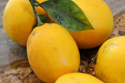 Close up of lemons on stem