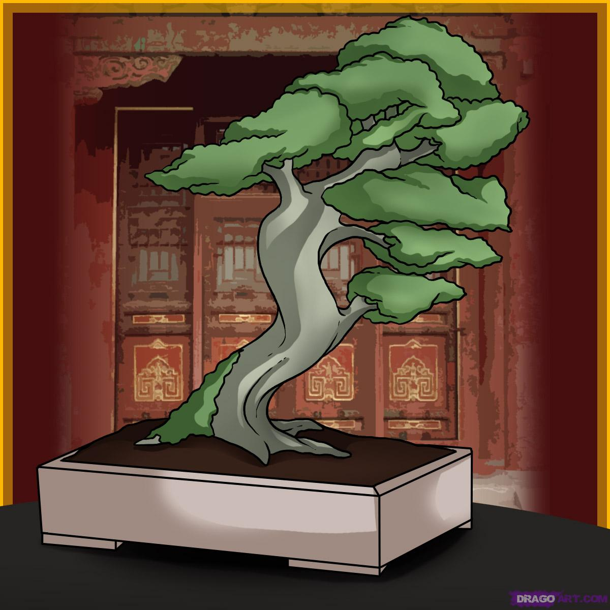 BONSAI ARTquot