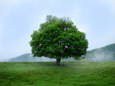 tree of life copacul vietii