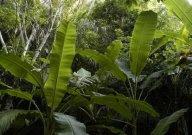 Gambar Kelompok Suku Pemburu Baru yang ditemukan di Papua