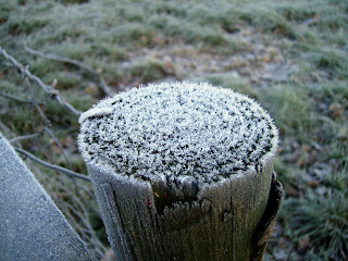 frosty fence post