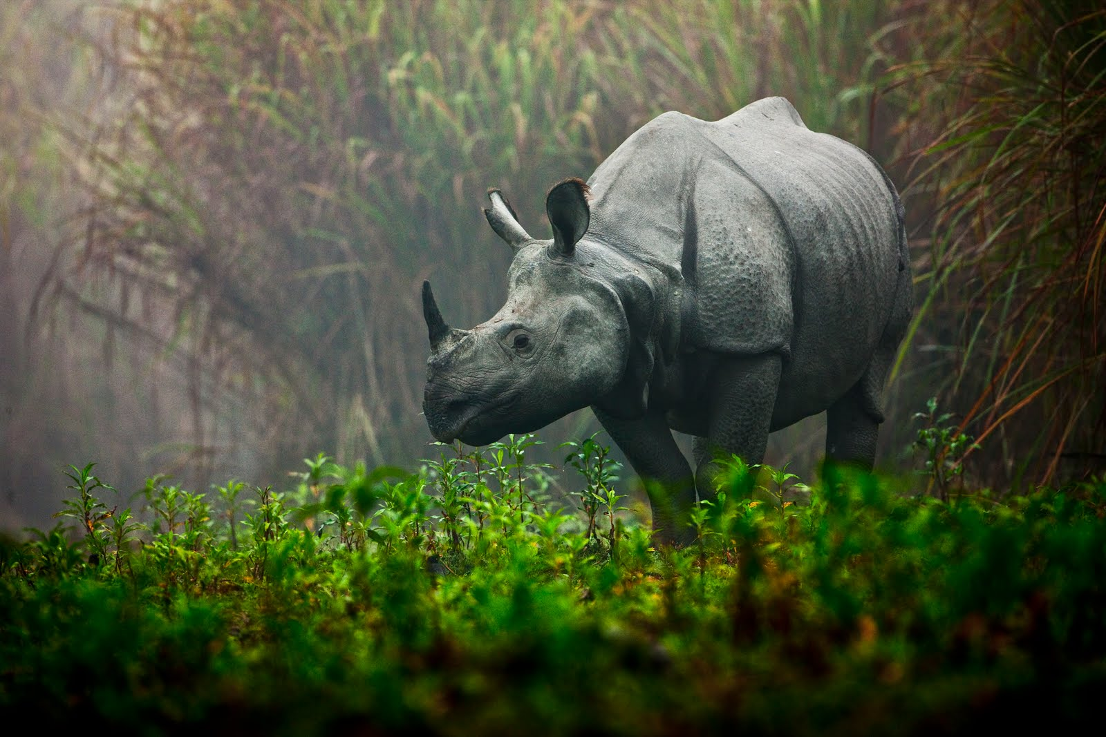 http://2.bp.blogspot.com/_LSib8N9sSgU/TDi47uAlPfI/AAAAAAAAAEI/1stWrBBii6c/s1600/wildlife_uri_golman.jpg