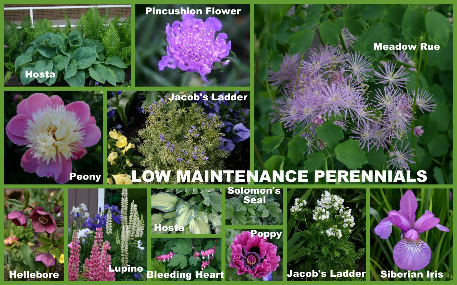 Low Maintenance Perennial Plants Sowing The Seeds