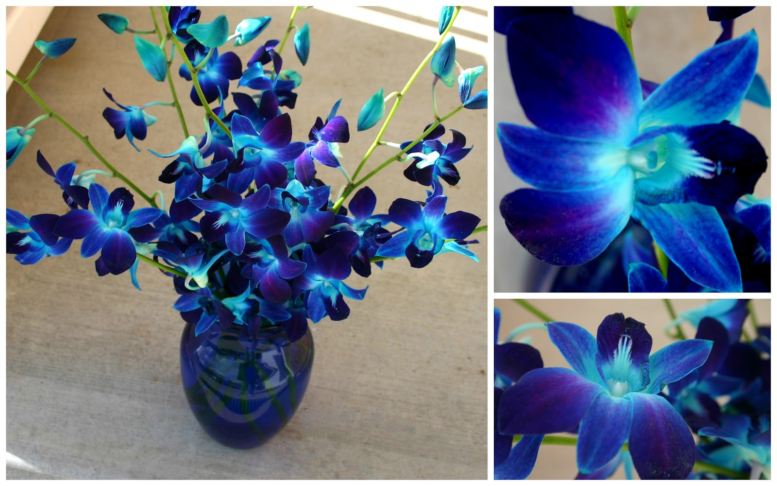 Advised Day Dyed Blue Orchids