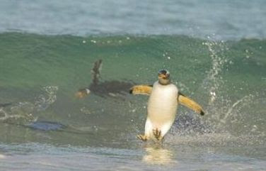 Animal surfando