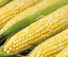 Di Indonesia jagung merupakan komoditi tanaman pangan penting, namun
