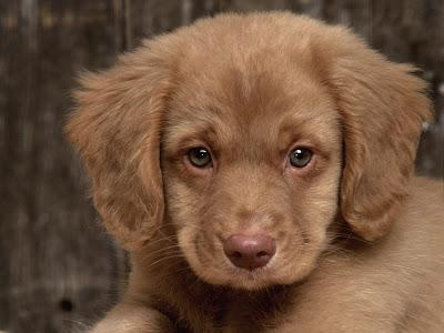 Top Quelle race de chien de petite a moyenne taille idéale? - Chiens  HO31