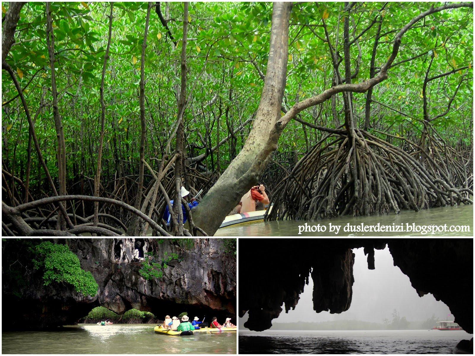 Orman banyosu hayat kurtarıyor