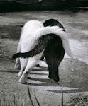 A amizade é um amor...