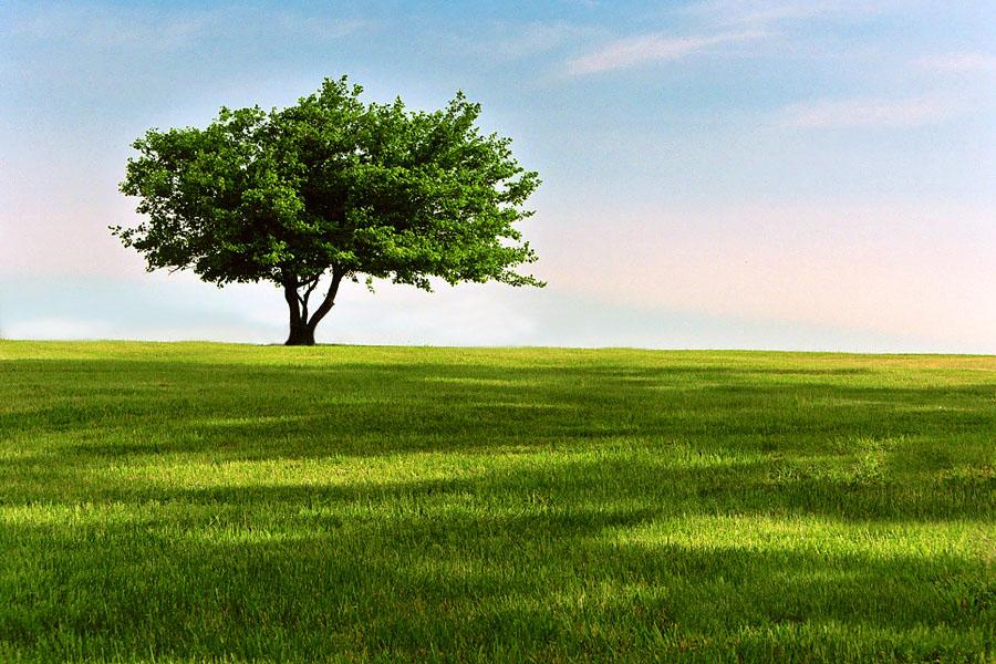 [tree+small.jpg]