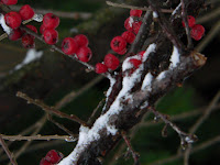 winter berries copyright kerry dexter