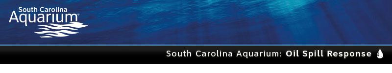 South Carolina Aquarium Oil Spill Response