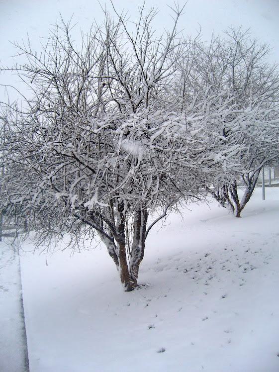 nieve el 8/03/2010