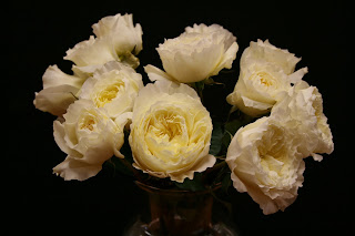 rose patience type single stem scented yes color white - White Patience Garden Rose