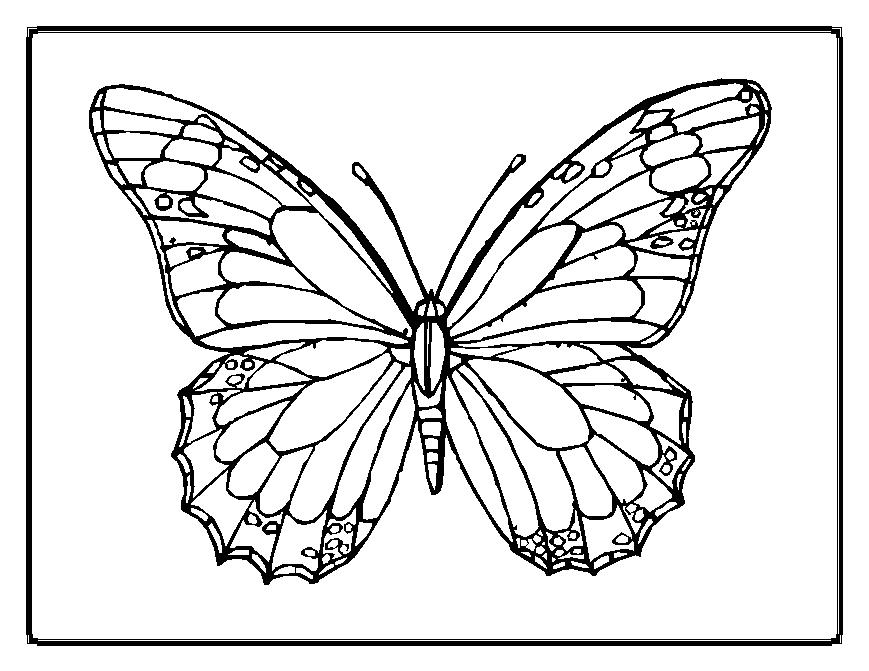 Printable Coloring Pages Animals Butterfly