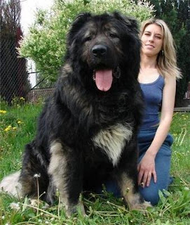 Carpathian Shepherd Dog and Human