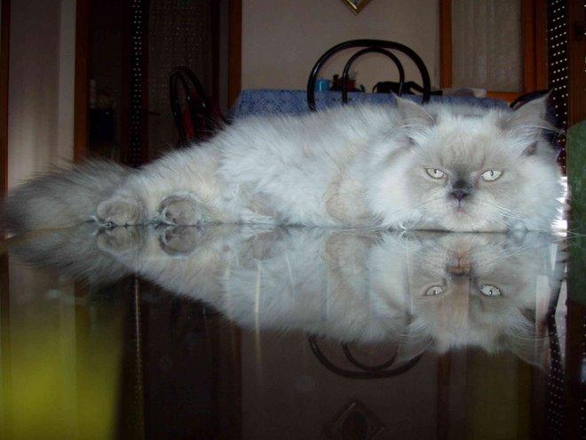 Il Gatto Fotogenico