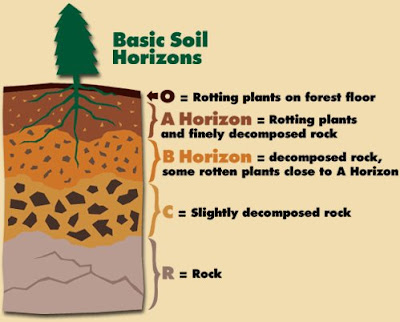The gallery for layers of soil diagram for kids for What is soil for kids