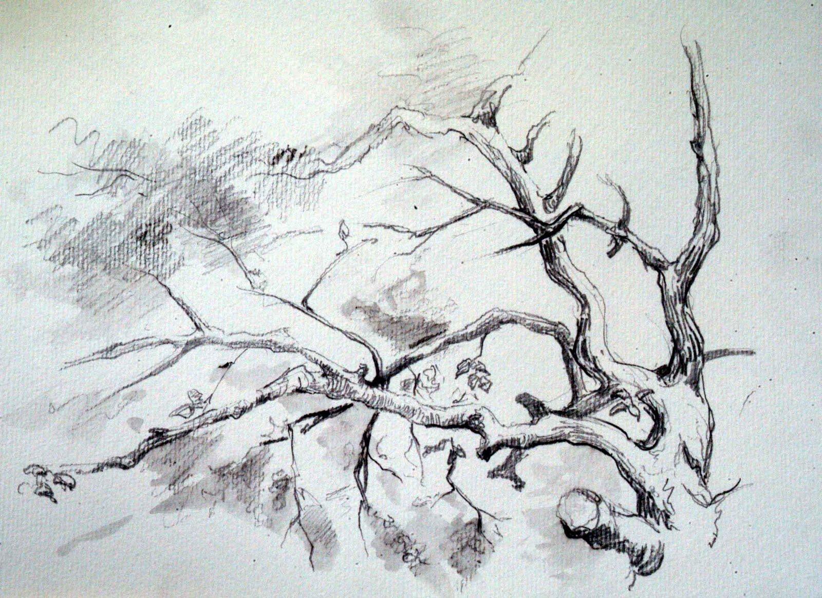 Desene in natura,Persunari 2008