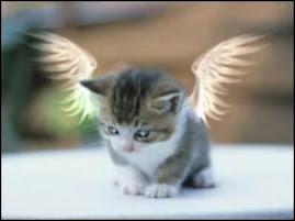 Ahhh What a Cute kitty