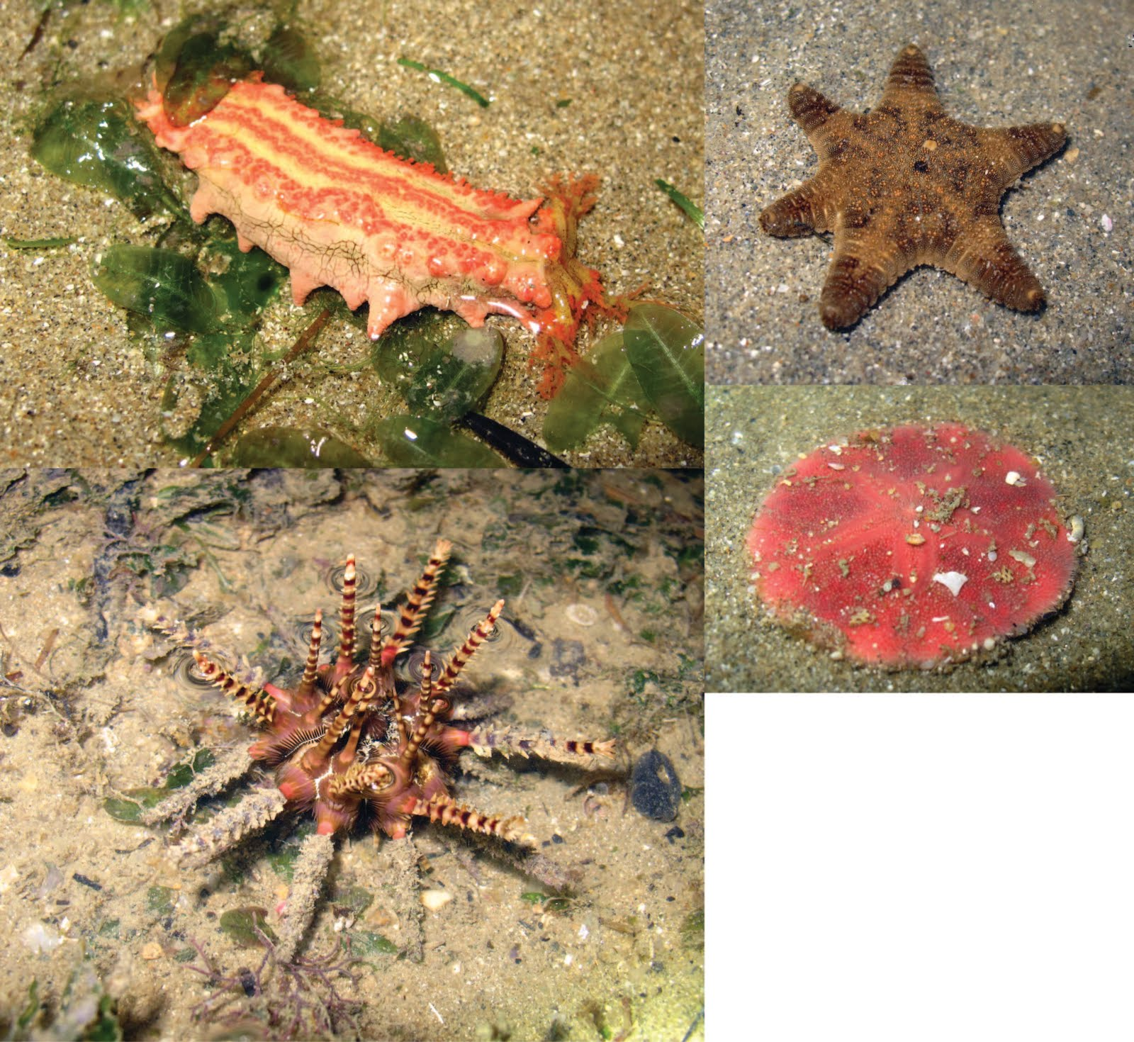 Seagrass beds animals - Other Animals That Occur Amongst The Seagrass Beds Would Be The Crabs And Crablets Not Only Do The Seagrass Beds Serve As Habitats Food Grounds And