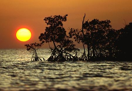 Everglades National Park. Everglades1
