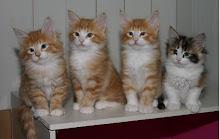 Mina katter har en egen hemsida