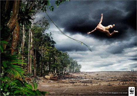 Save the Forest...