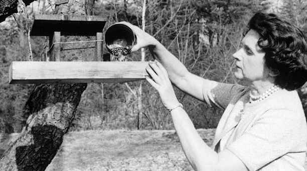 essays about rachel carson A zoologist, biologist, environmentalist, writer, ecologist and a champion of nature conservation- rachel carson was all this and much more from writing radio.