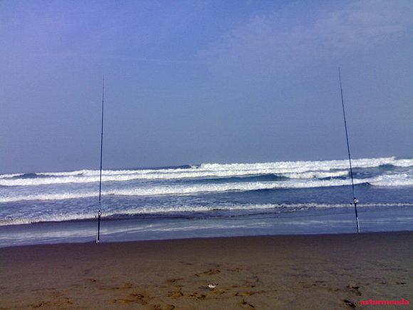 Gracias por visitar mi blog. Un Saludo y pon el plomo en la quinta ola....